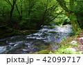 清流 コケ 森 川 42099717