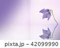 ききょうイメージ 42099990