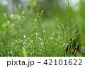 水滴 雫 朝露の写真 42101622
