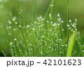 水滴 雫 朝露の写真 42101623