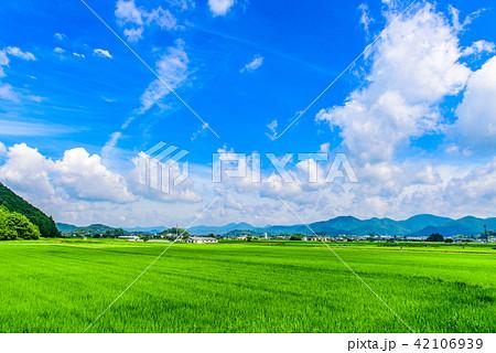 夏の田園風景 丹波篠山 42106939