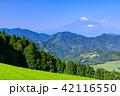 富士山 茶畑 新緑の写真 42116550