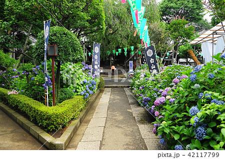 6月 文京12白山神社・文京あじさいまつり 42117799