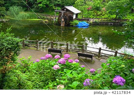 6月 松濤06水車小屋のある池・渋谷区立鍋島松濤公園 42117834