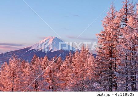 富士山と冬の朝焼けに染まる樹氷 42119908