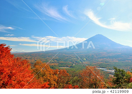秋を彩る富士山と紅葉 42119909