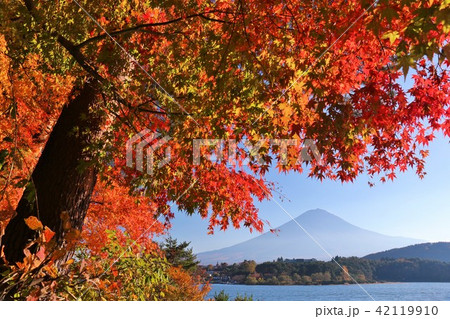 秋を彩る富士山と紅葉 42119910