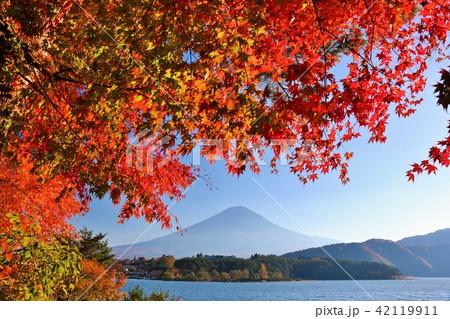 秋を彩る富士山と紅葉 42119911