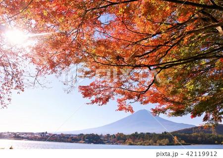 秋を彩る富士山と紅葉 42119912