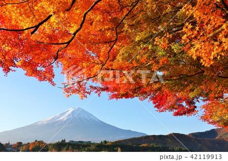 秋を彩る富士山と紅葉 42119913