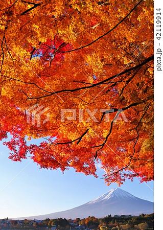 秋を彩る富士山と紅葉 42119914