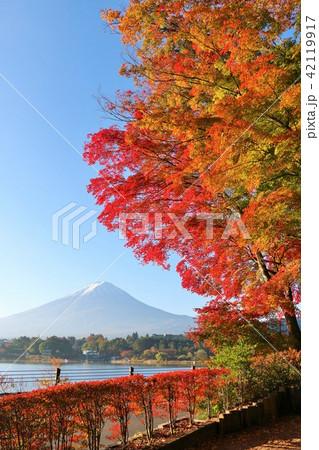 秋を彩る富士山と紅葉 42119917
