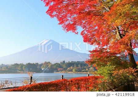 秋を彩る富士山と紅葉 42119918