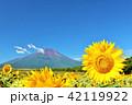 夏を彩る青空とひまわり そして富士山 42119922