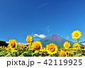 夏を彩る富士山とひまわり 42119925