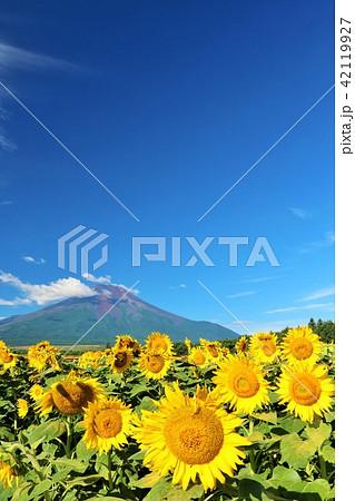 夏を彩る富士山とひまわり 42119927