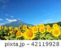 夏を彩る富士山とひまわり 42119928
