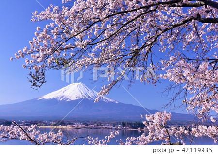春を彩る富士山と桜 42119935