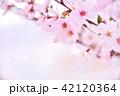桜 花 春の写真 42120364