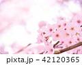 桜 花 春の写真 42120365