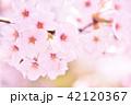 桜 花 春の写真 42120367