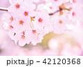 桜 花 春の写真 42120368