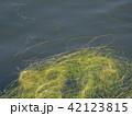 池の藻 42123815