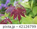 あき 秋 水滴の写真 42126799