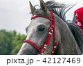 Grey arabian horse. 42127469