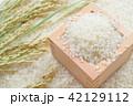 米 稲穂 枡の写真 42129112