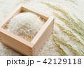 米 稲穂 枡の写真 42129118