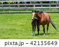 牧場 親子 馬の写真 42135649