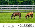 牧場 馬 放牧の写真 42135651