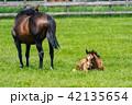 牧場 馬 放牧の写真 42135654