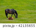 仔馬 親子 馬の写真 42135655