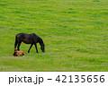 仔馬 親子 馬の写真 42135656