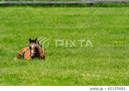 牧場の風景 馬 42135681