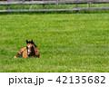 牧場 馬 放牧の写真 42135682