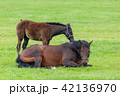 仔馬 親子 馬の写真 42136970