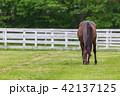 牧場 サラブレッド 馬の写真 42137125