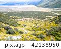 道路 ニュージーランド 風景の写真 42138950