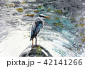 アオサギ  野鳥 清流 手書き 水彩画 42141266