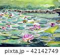 蓮の花 スイレン 水彩画 42142749