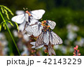 Butterflies with white wings and flower 42143229