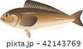 魚 海水魚 ベクターのイラスト 42143769