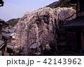3月 京都東山の産寧坂(三年坂)の枝垂桜 42143962