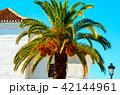 ヤシ やしの木 パームツリーの写真 42144961