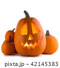かぼちゃ カボチャ 南瓜の写真 42145383