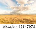 広大なニュージーランドの風景 42147978