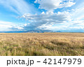 広大なニュージーランドの風景 42147979